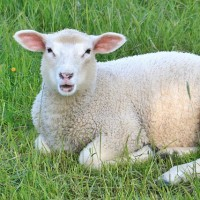 The Lake District Woolfest Says Hello to Summer