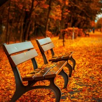 Picture of some benches during autumn.